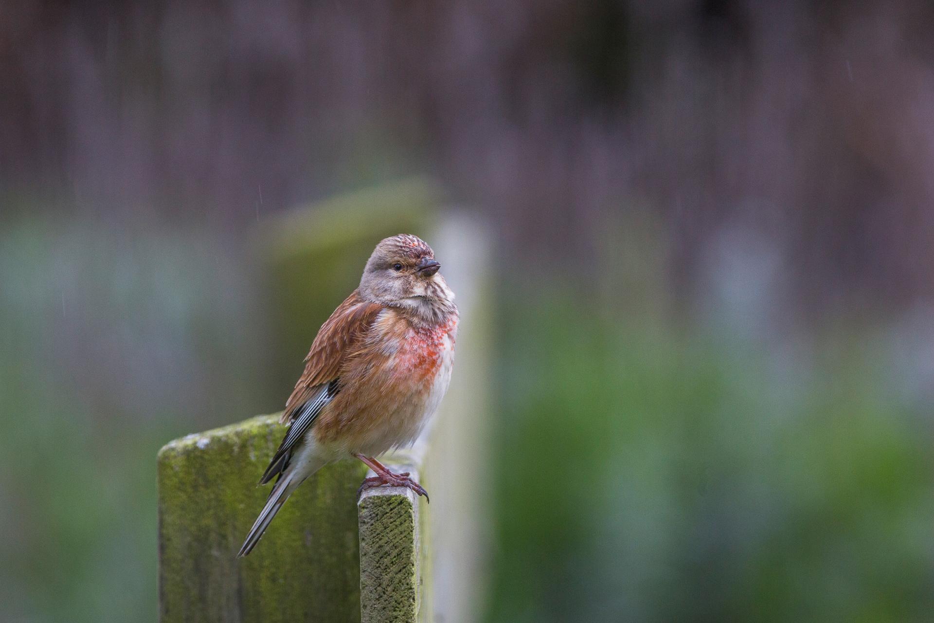 Vogels van Texel